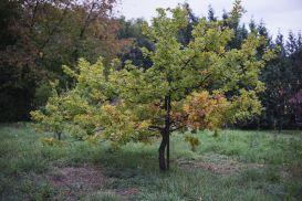 Sponsor a truffle oa