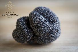 Fresh Black Truffles (tuber melanosporum Vitt.)