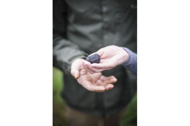 Découvrez le monde secret de truffes