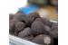 Discover the secret world of truffles