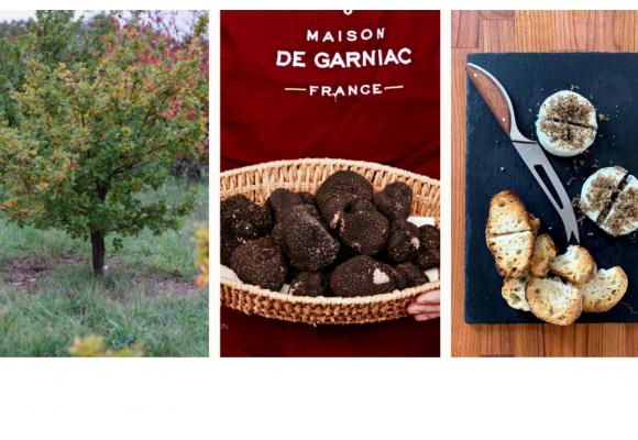 La truffe de Bourgogne est arrivée