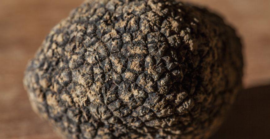 La truffe, la vraie