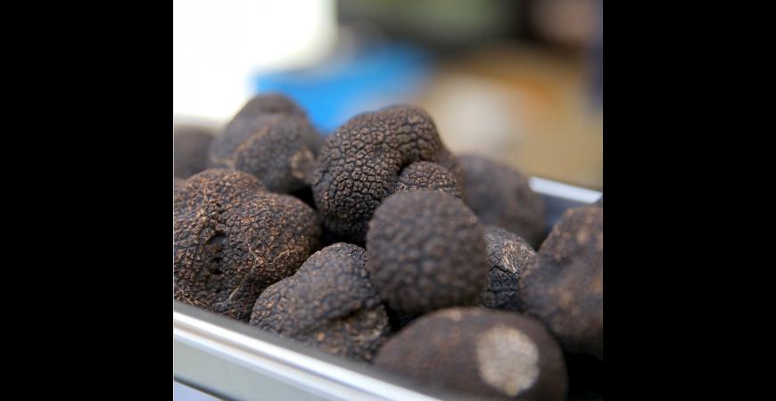 Une vidéo avec nos conseils pour choisir et conserver une truffe